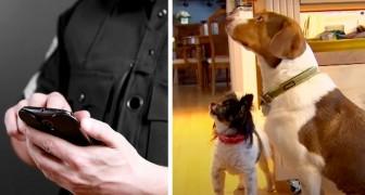 Due cani giocano con il cellulare del padrone e chiamano per sbaglio la polizia 16 volte in mezz'ora