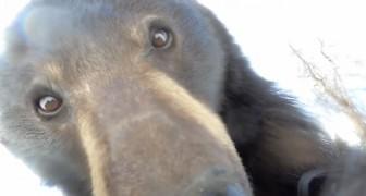 Een gigantische zwarte beer vindt een GoPro in het bos en zet hem aan: de video is hilarisch