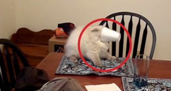 This is what cats do best ... and it's hilarious !