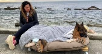 Sie geben dem gelähmten Hund einen letzten Spaziergang am Meer auf einem mobilen Bett
