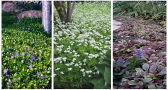 Una distesa di fiori in giardino: usa le piante tappezzanti come alternative al prato