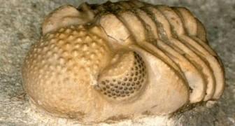 Questa incredibile creatura preistorica aveva centinaia di occhi in uno: la scoperta dei ricercatori