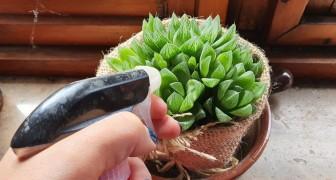Scopri come usare il sapone di Marsiglia e altri metodi naturali per la cura delle piante grasse