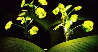 Un team di scienziati riesce a far emettere luce alle piante: l'invenzione del MIT