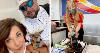 Dieser Chihuahua hat sich im Koffer seiner Besitzer versteckt, weil er mit ihnen in den Urlaub wollte