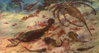Trovati in Cina i resti di un gigantesco scorpione marino: era il predatore più temuto del mare