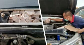 Man verstopt $1.300 in de auto van zijn vrouw: na een paar uur ontdekt hij dat muizen het hebben opgegeten