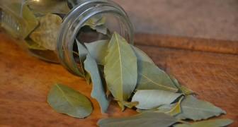 Usa le foglie di alloro per profumare gradevolmente e in modo naturale tutta casa