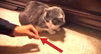 She tries to give a treat to her cat, but something HILARIOUS keeps happening !