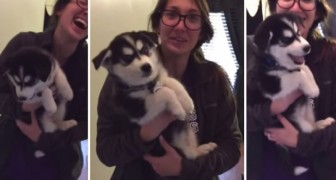 Ciò che fa questo cucciolo fa morire dalle risate la sua padrona. Assurdo!