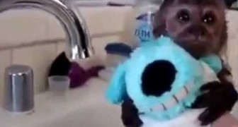 Baby monkey gets a bath