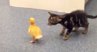 The reaction of these kittens in front of curious situations is absolutely adorable !