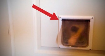 What you see is a small door for cats, but look what happens shortly after!