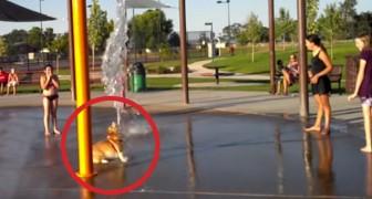 Ze brengen de hond naar het waterpark ... Zijn reactie zal uw dag veranderen!!!