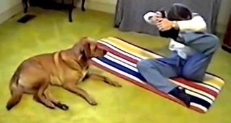 Dröm träningspartnern, Yoga-hunden!