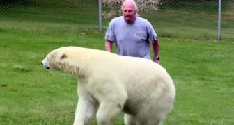 Un uomo rincorre un orso polare... il modo in cui reagisce è stupendo