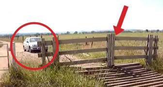 Het ziet eruit als een normale houten poort, maar wacht maar tot hij de poort benaderd...