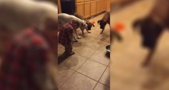 A child is having fun with three dogs: what happens next is HILARIOUS !
