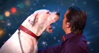 Quando este cão sobe no palco, ninguém acredita no que está ouvindo!