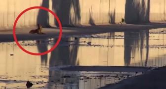 Su patron lo abandona en el medio del rio: aqui el emocionante salvataje