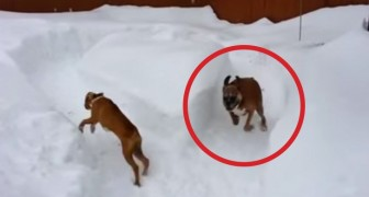 This older dog pranks a puppy in a brilliant way... I can't stop laughing !