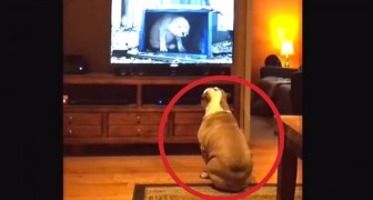 Pasan su spot preferido en TV: la reaccion del bulldog es formidable
