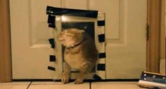 Scherzo al povero gatto