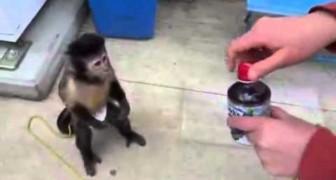 A monkey buys a drink