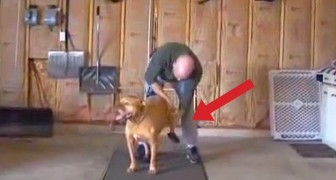 What this man does for his dog is really SPECIAL