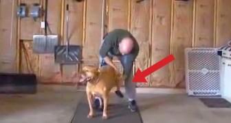 Ciò che quest'uomo fa per il suo cane è davvero SPECIALE.