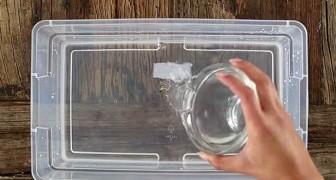 Aggiunge latte di cocco all'acqua e crea una ricetta che tutte le donne ameranno