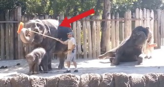 Wat deze olifant doet, bewijst dat hij niet in een dierentuin hoeft te leven!