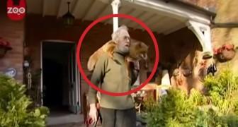 Un uomo salva una volpe ferita da un cane... la loro vita insieme è commovente