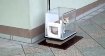Zodra de kat in de transparante doos komt ontdekt hij iets briljant.