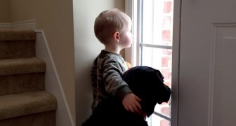 This cute dog is missing his family, the way his friend comforts him is adorable ...!