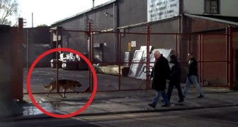 Un cane attende dietro un cancello: il motivo geniale vi farà sorridere!