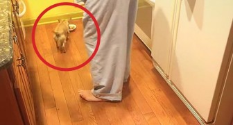 Adotam um novo cachorro: a sua reação na hora de comer é impressionante
