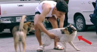 Todos os dias ele recolhe animais de rua: o motivo é especial