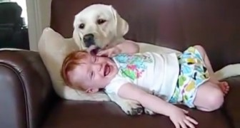 The dog cuddles her like a puppy ... her reaction will make you die laughing!