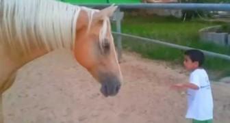 Un cavallo si avvicina a un bambino speciale: ciò che avviene è emozione pura