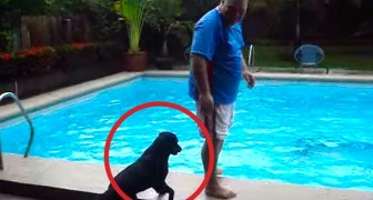A man is standing on the edge of the pool: what the dog does is ... EVIL!