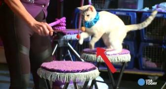 Een vrouw adopteert katten en zet een spektakel op UNIEK in zijn genre