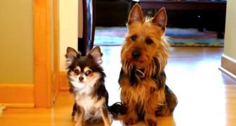 Sie fragt, wer der Schuldige für das Malheur ist: Schaut mal, was der Hund rechts macht...