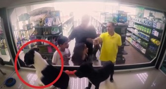 Ze wisselen rashonden met zwerfhonden: bekijk de reactie van de klanten in de winkel