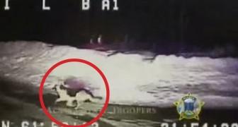 A polícia vê um cachorro no bosque e decide seguí-lo: a descorta é assustadora