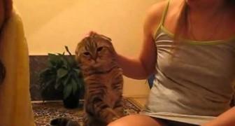 Il gatto chiede di essere coccolato