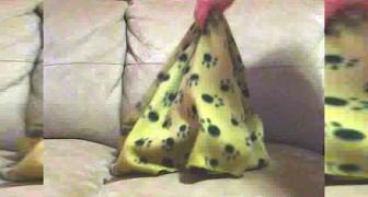 Cobre o seu cachorro com uma coberta... veja o que acontece quando ele tira a coberta!