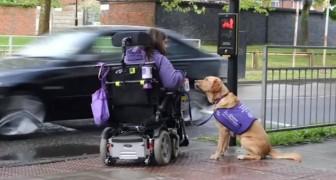 Diese behinderte Frau braucht Hilfe: Das macht ihr Hund jeden Tag für sie