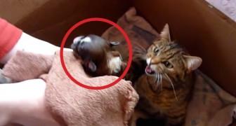 En katt har adopterat en övergiven hundvalp. Tänk att rasen kan ibland vara så oviktig!