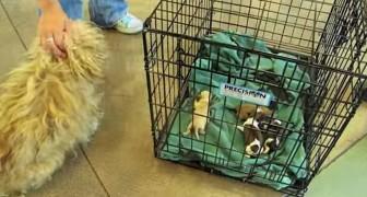 Een moeder wordt herenigd met haar pups... haar reactie zal je tot tranen roeren